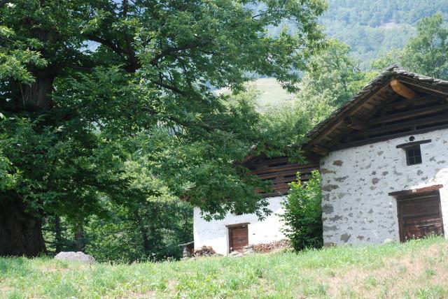 Die Kastanienhäuschen von Soglio - hier wurde geerntet, gelagert und verarbeitet.