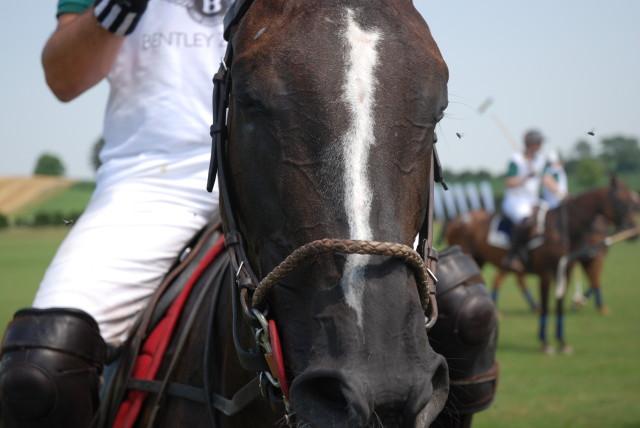 Polo Pony Polo Park Zürich