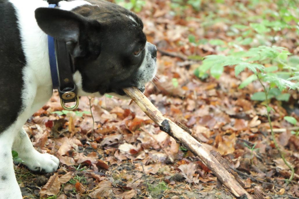 In der Natur des Hundes - das Gebiss abreiben.