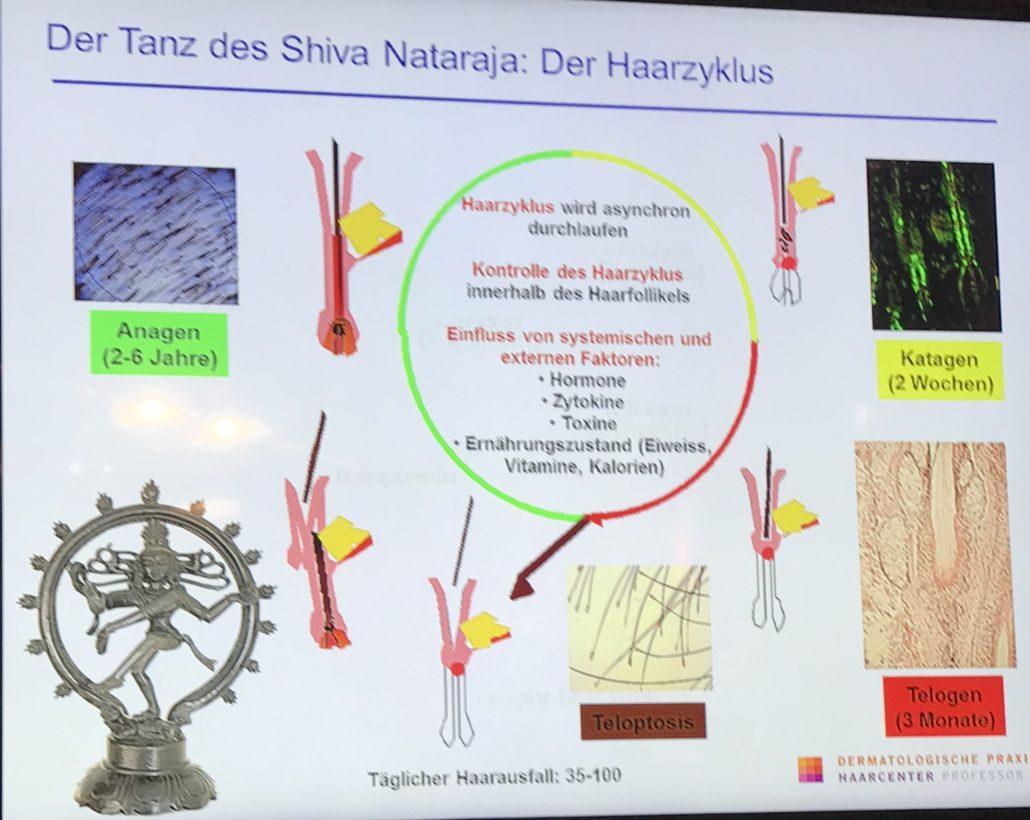 Der biologische Zyklus eines Haares.
