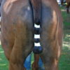 Problem Pferdemist