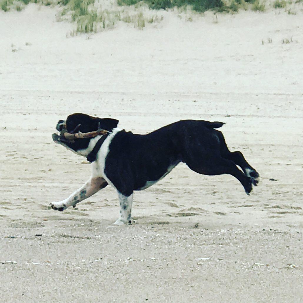 Ein schönes Leben. Unser Wunderwauzi am Strand von Sylt.