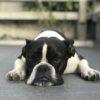 Adopt a Pet oder ich bin us dem Tierheim. Pedigree spendet dem Schweizer Tierschutz.