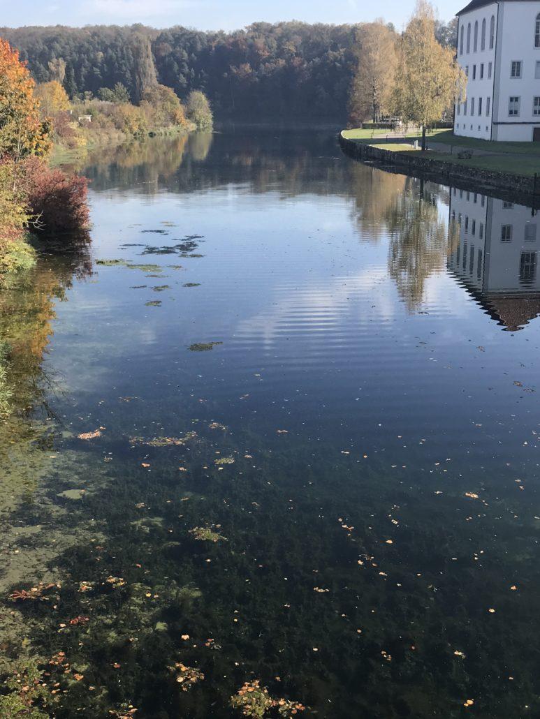 Blick von der Brücke auf die Musikinsel Rheinau